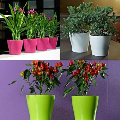 انواع گلدان پلاستیکی آپارتمانی