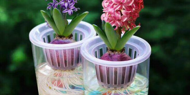 گلدان پلاستیکی هیدروپونیک